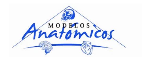 Modelos Anatomicos